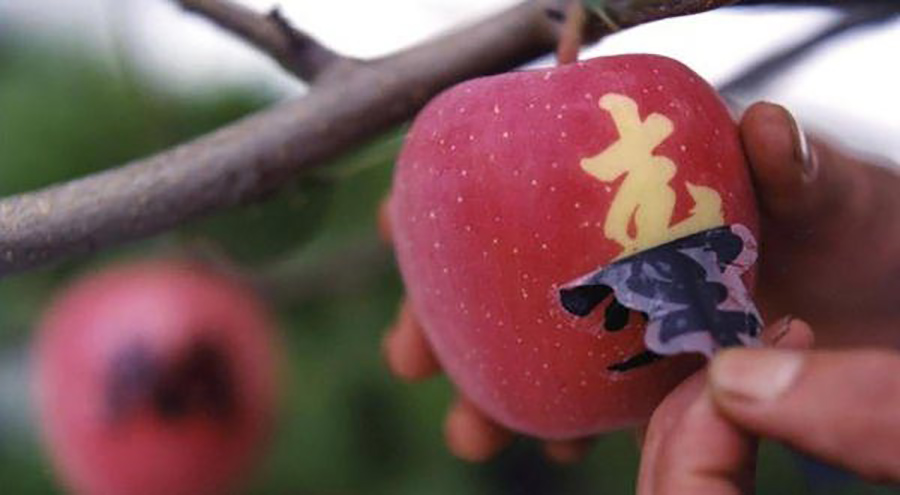 Discover the 10 most expensive fruits in the world