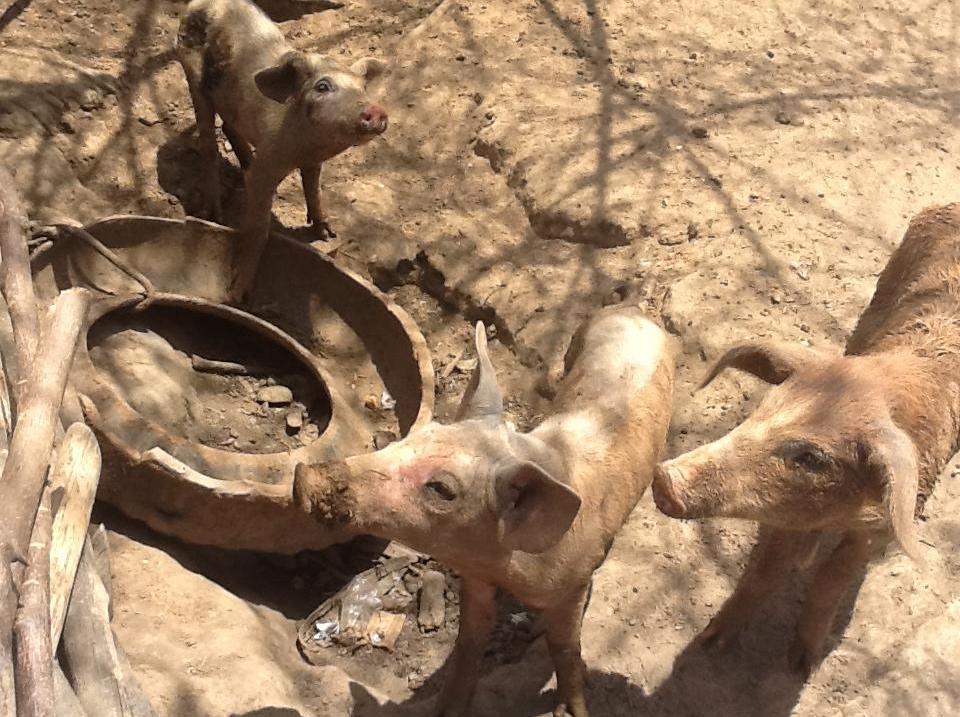 animais na seca
